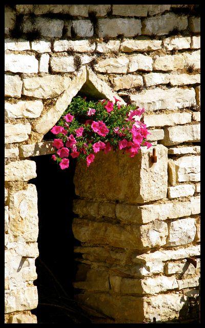 Stone Home Doorway with Pink Petunias - Burgundy France