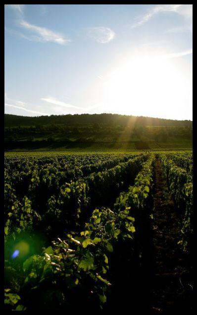 sunset Burgundian vineyards Bourgogne vignobles couche du soleil