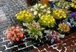 Hauptstrassse Flowers