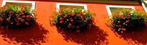 flowers in Heidelberg windowboxes