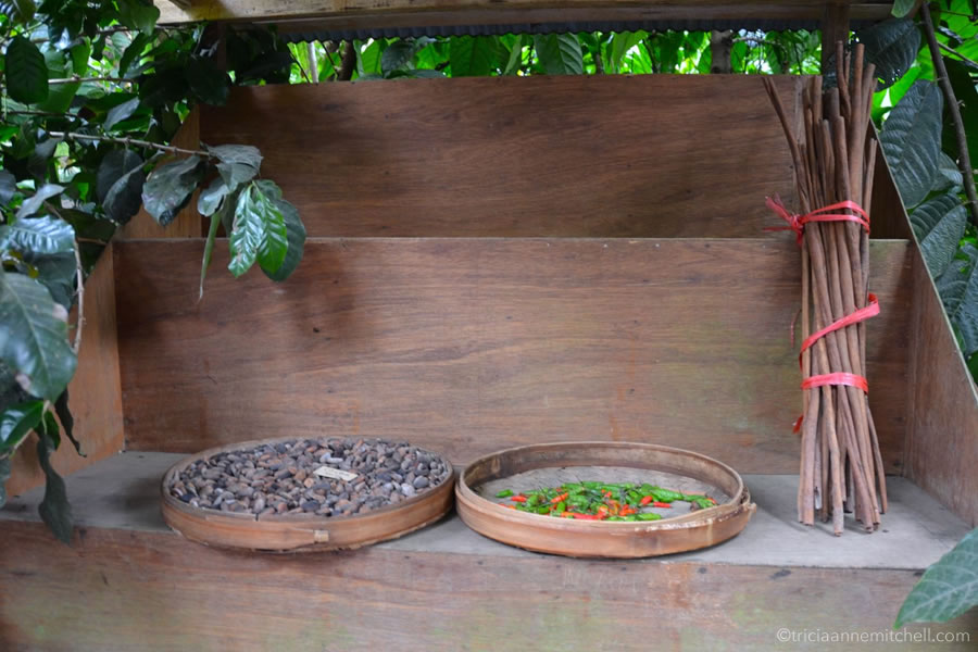 Balinese spices and foods are on display at a touristic coffee plantation in Bali. There is a basket of cocoa beans, chili peppers, and a bunch of cinnamon sticks stands upright.