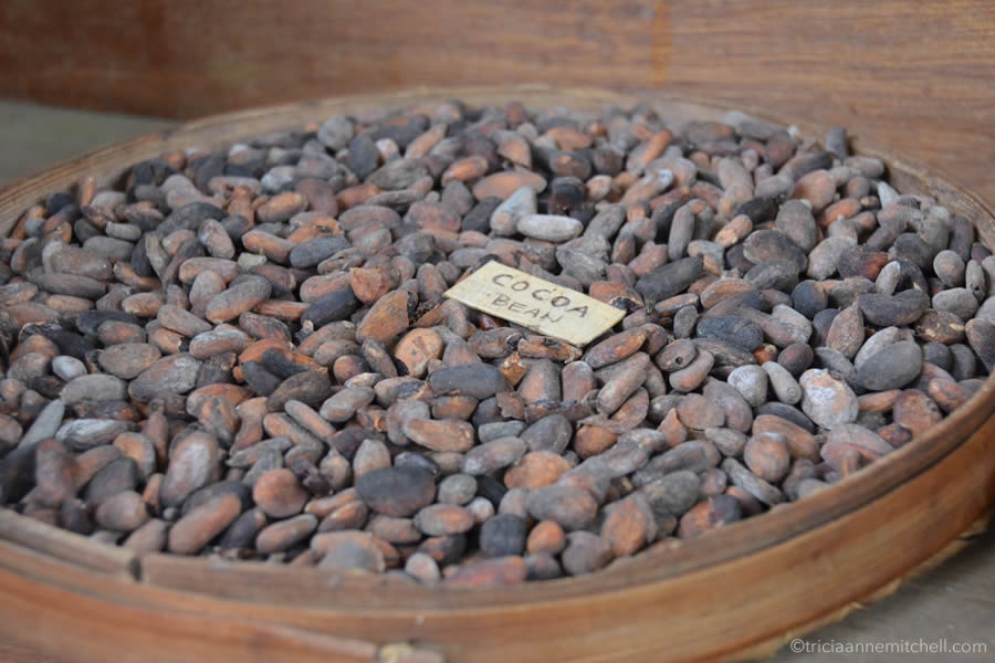A dish of cocoa beans sit on display at a coffee plantation in Bali.