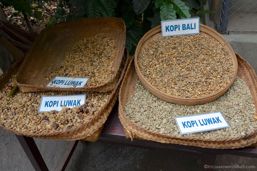 Several types of coffee beans, including civet, or poop coffee, sit on a shelf on the Indonesian island of Bali.
