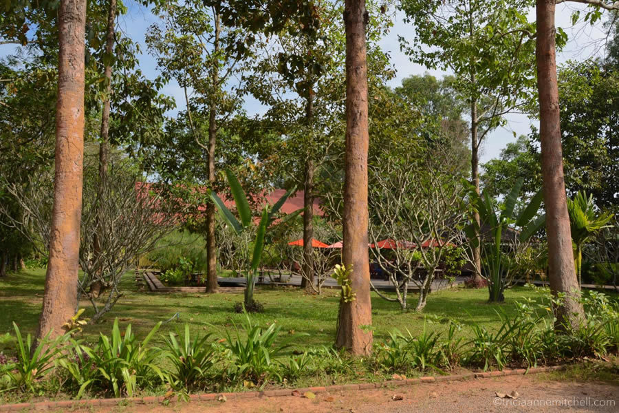 The trees and gardens on the grounds of Artisans Angkor, near Siem Reap, Cambodia.