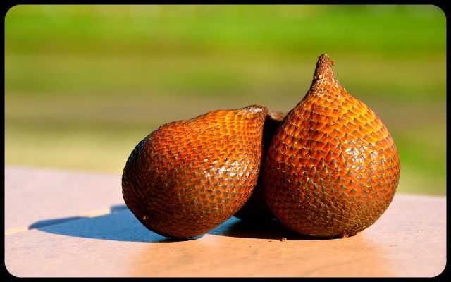 Snake skin fruit in Bali