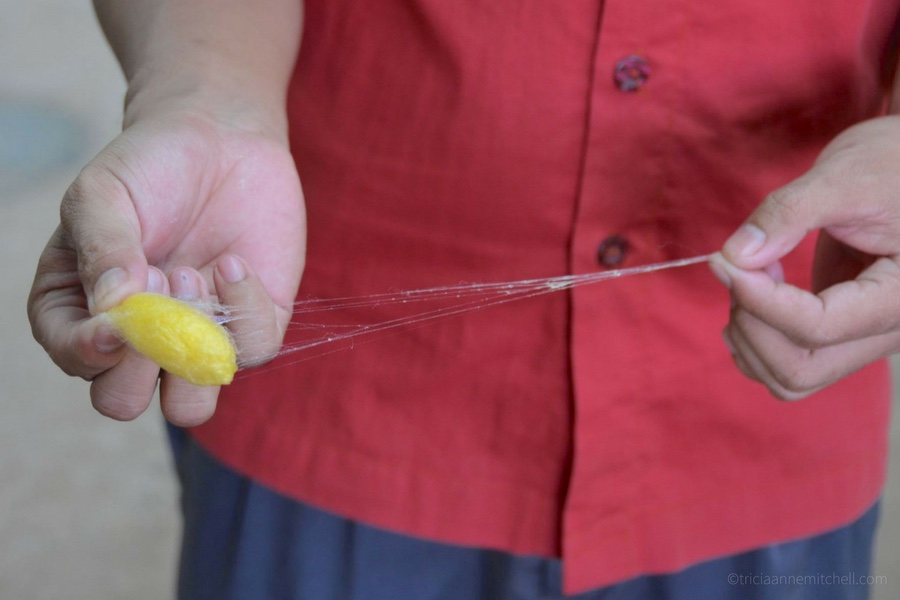 An employee of a Cambodian silk farm shows how to extract a strand of silk from a cocoon.