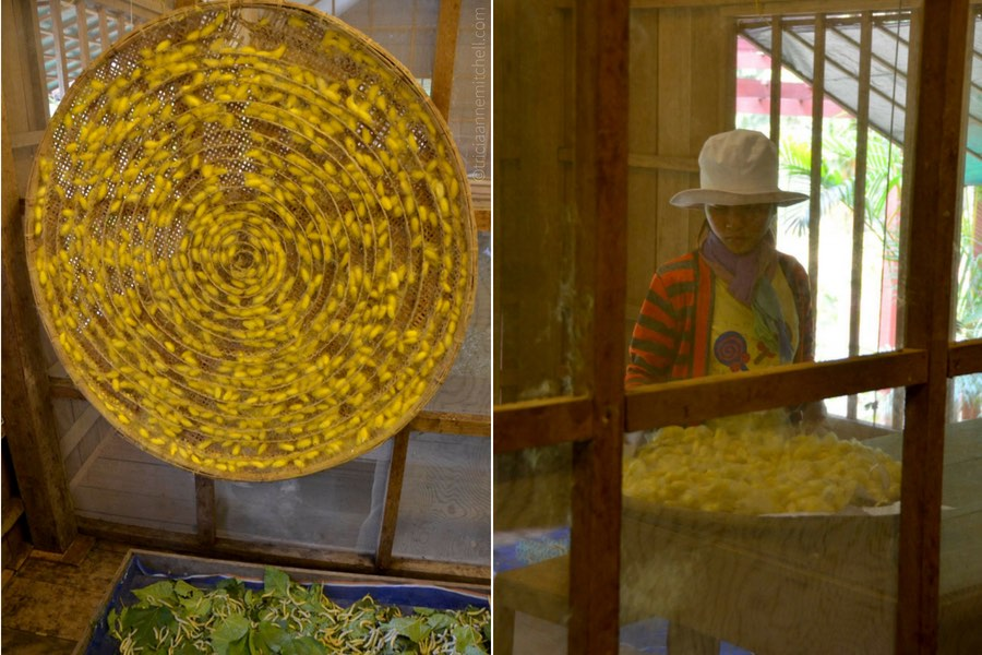 silk worm cocoons at Cambodian silk farm