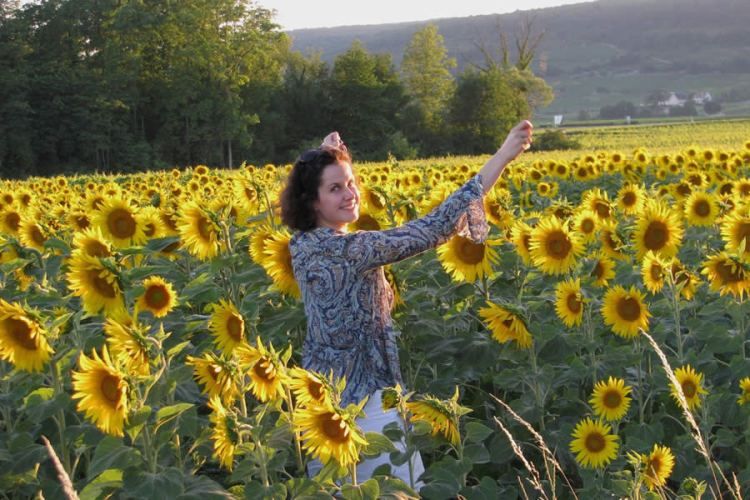 Burgundy sunflowers