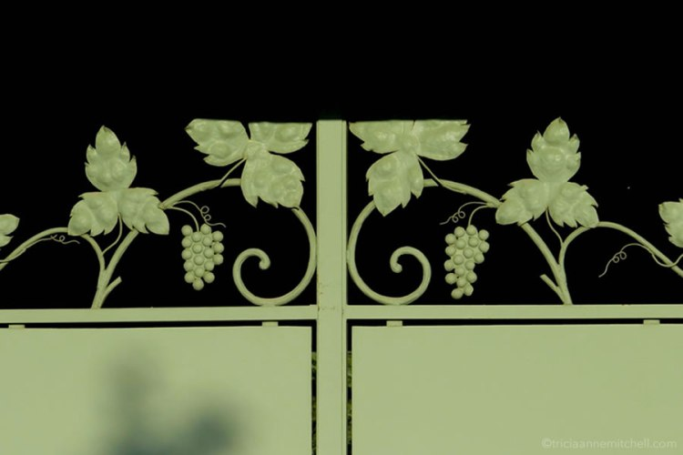 grapevine green gate Burgundy France