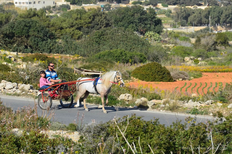A man and a child ride in a horse-drawn sulky cart, in Malta