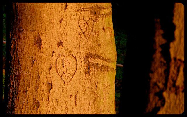 Trees carved with heart on Heidelberg Castle grounds