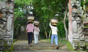 In Ubud, Bali, three women carrying baskets of soils on their heads.