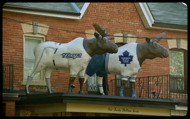Kensington Toronto Maple Leaf Moose