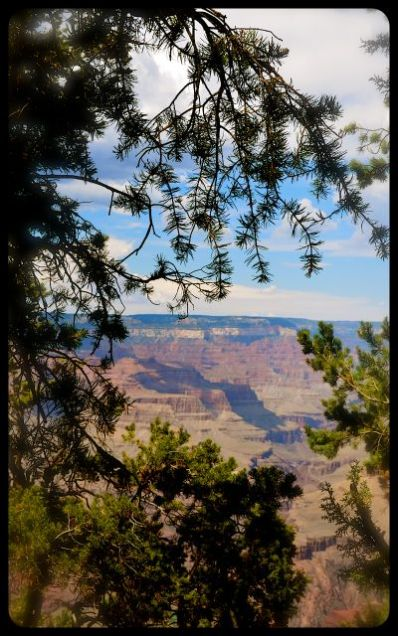 Grand Canyon as seen through silhouette of evergreen
