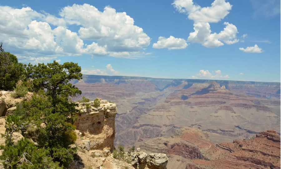 Trees frame the south rim of the Grand Canyon. The sky is blue, and there are white, fluffy clouds overhead.