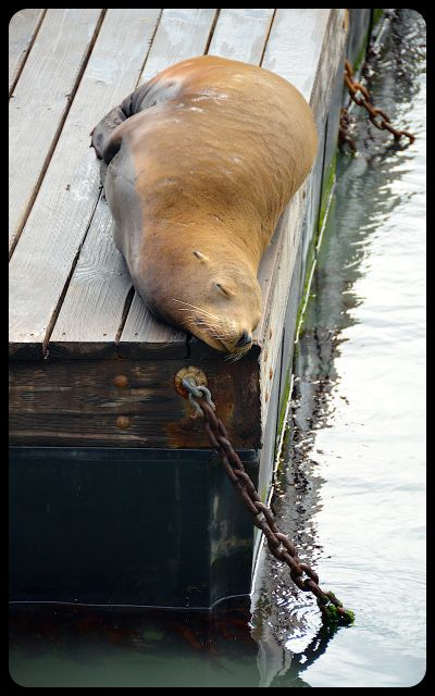 Sea lion in San Francisco