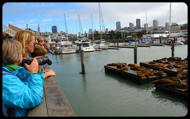 Tourists photographing California sea lions