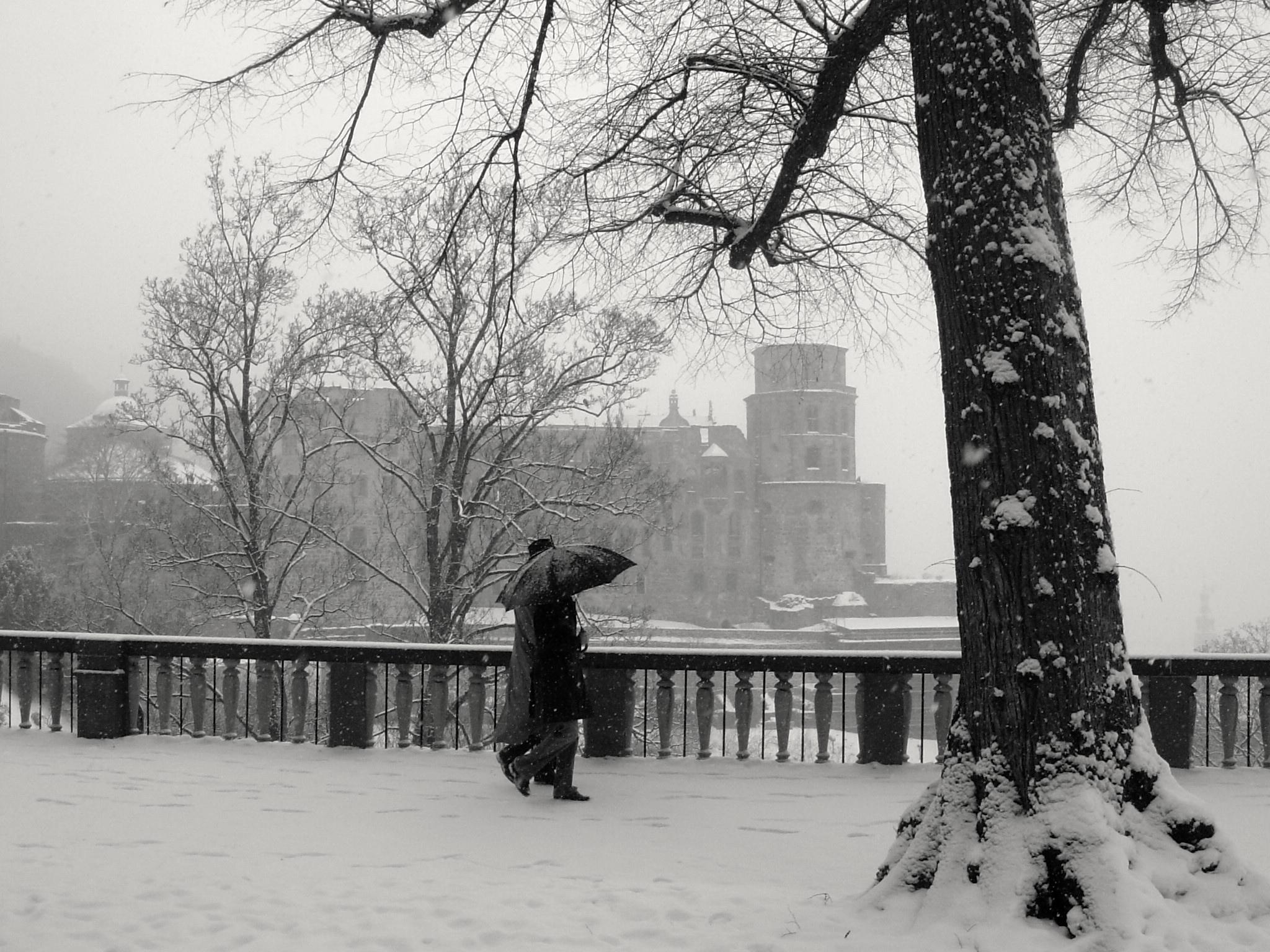 Mitchell, Tricia WHITE Heidelberg Castle in Snow Capture the Color Contest