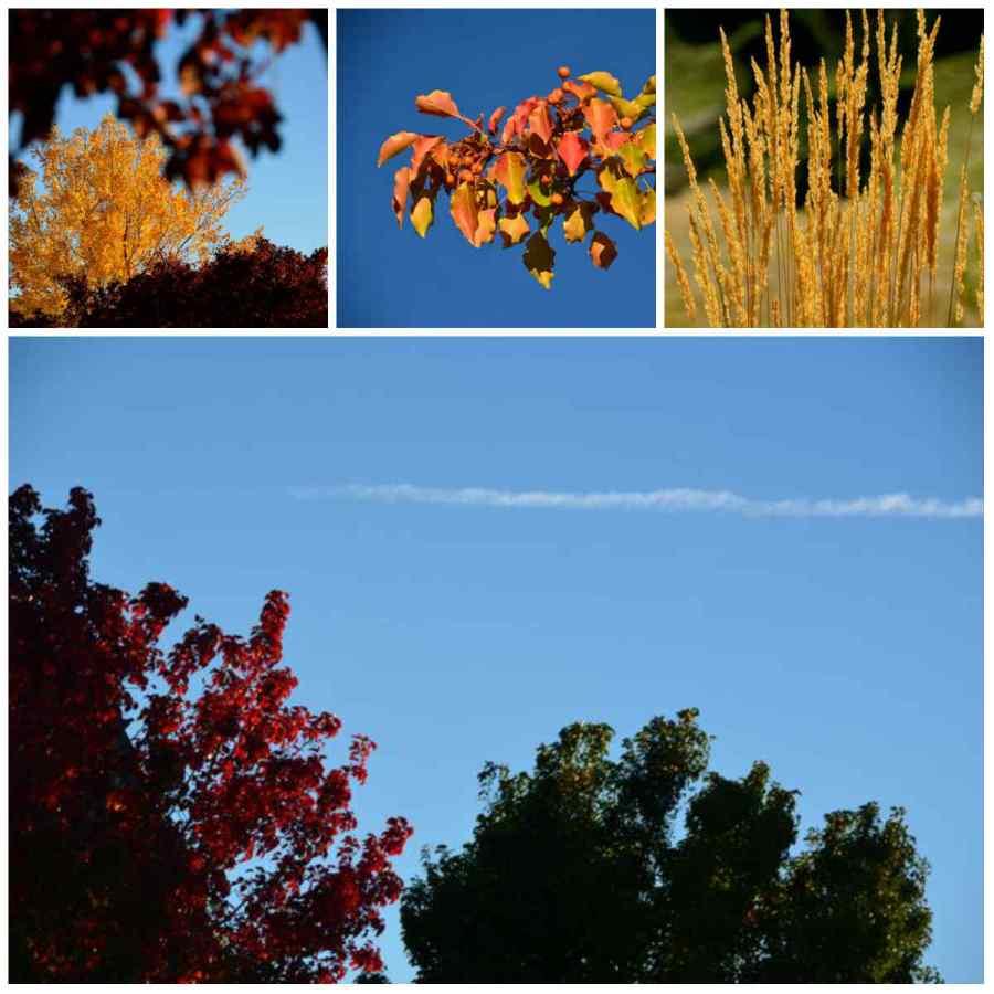 autumn colors in reno nevada