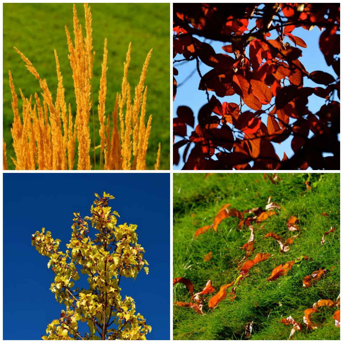 autumn leaves collage reno nevada