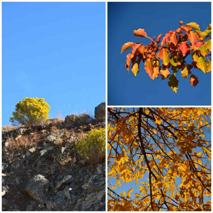autumn leaves in the high desert