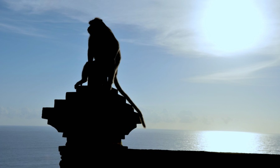 A Balinese macaque (monkey) sits on a column looking out at the ocean at the Uluwatu Temple.