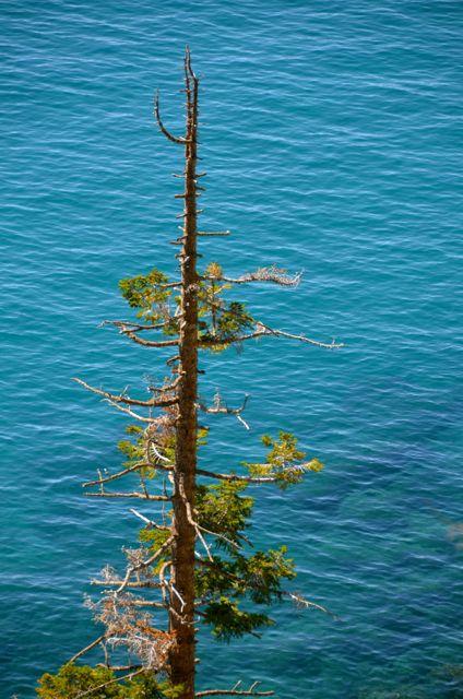 Evergreen and Lake Tahoe