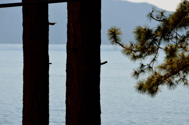 Tree Trunks at Lake Tahoe