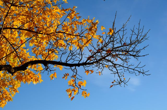 yellow leaves in reno high desert