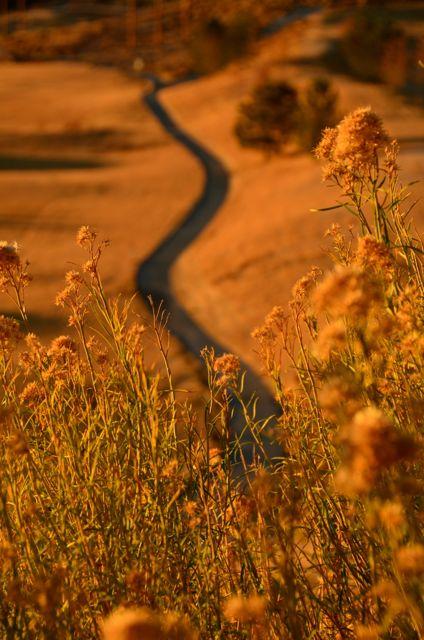 The Golden Lane - Reno, Nevada