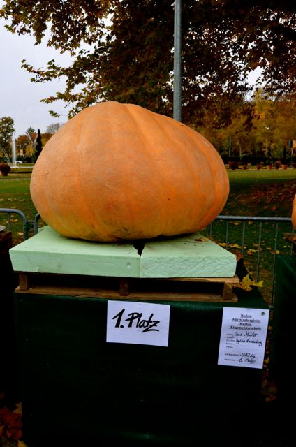 A first-place pumpkin at the Ludwigsburg Pumpkin Fest in Germany.