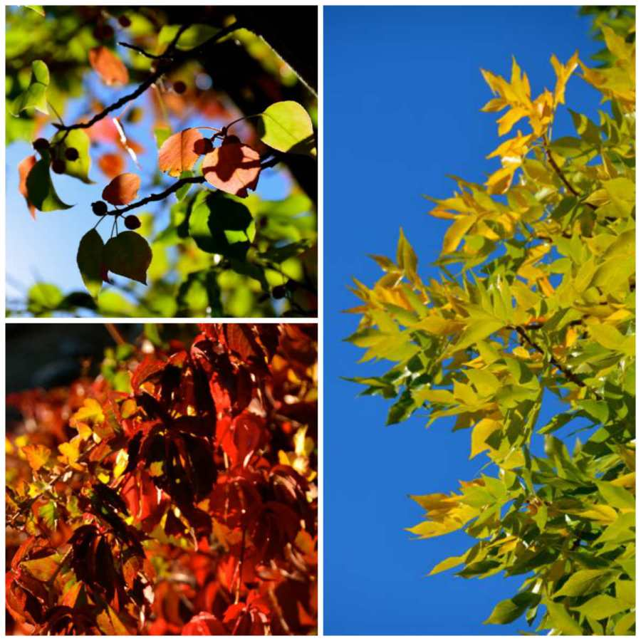 leaves autumn reno blue sky nevada