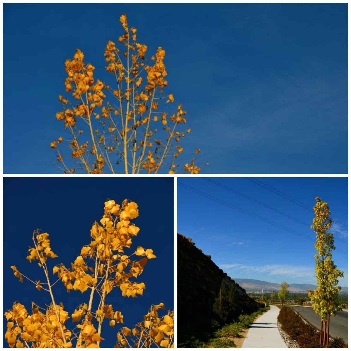 yellow leaves reno nevada high desert