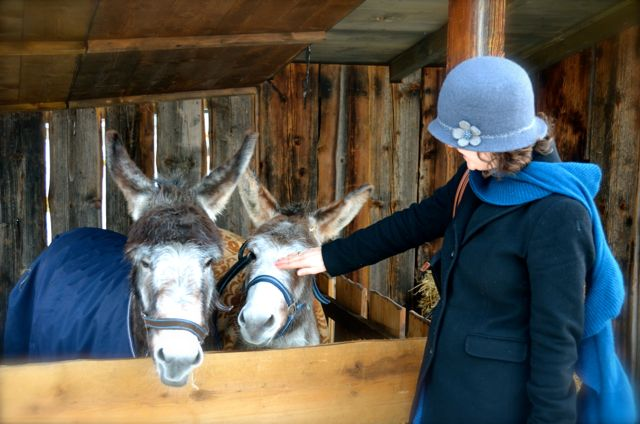 donkeys at Oberammergau Christmas Market