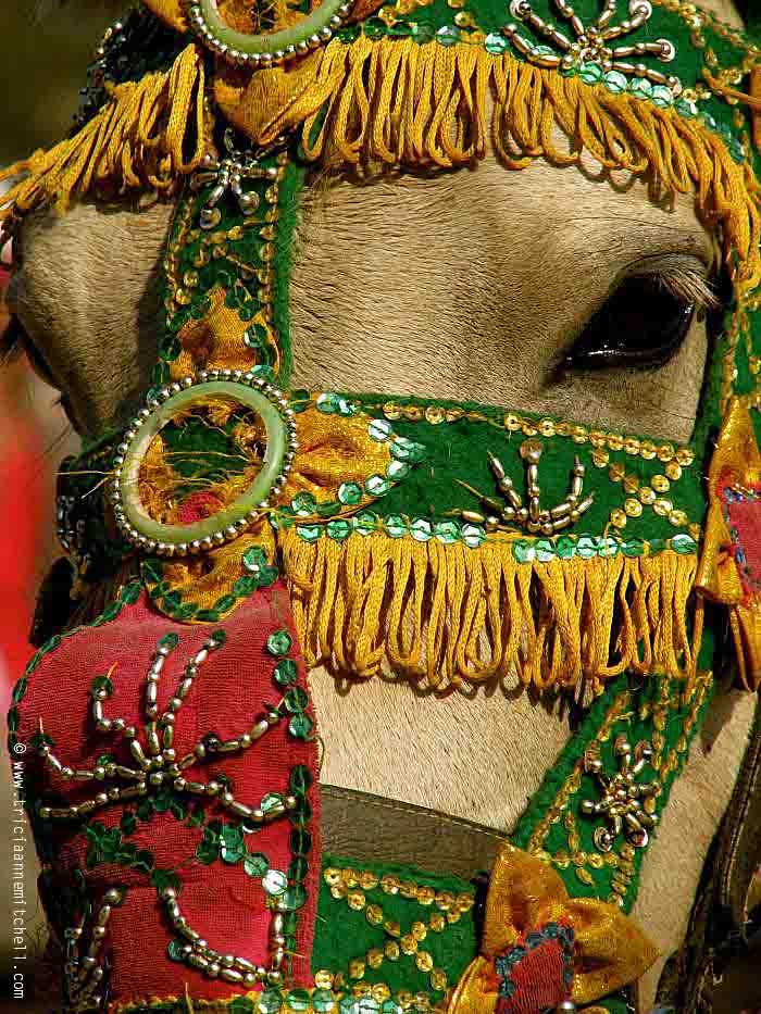 horse-at-angkor-wat-cambodia