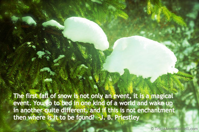 snow evergreen quote