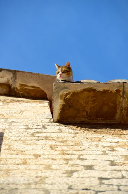 Cat on roofi n Trogir Croatia 3