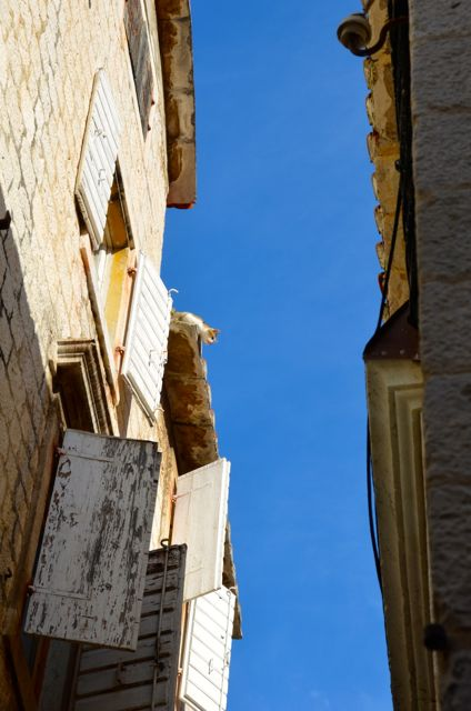 Cat on roofi n Trogir Croatia1