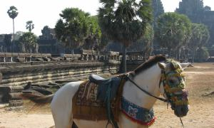 A horse stands in front of Angkor Wat, in Cambodia.
