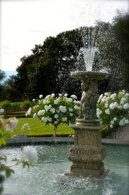 A fountain and white rose bushes at the Ledson Winery and Vineyards in California.