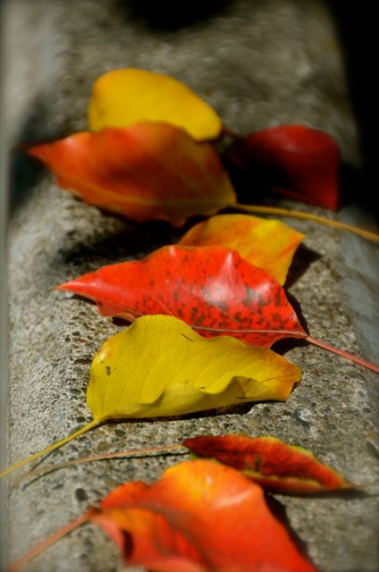 Red and yellow leaves sit on a curb in California's Napa Valley.