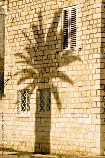 A palm tree casts shadows on the wall of a stone building in Trogir, Croatia.