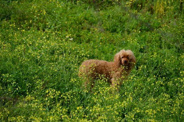 dog in green and yellow field