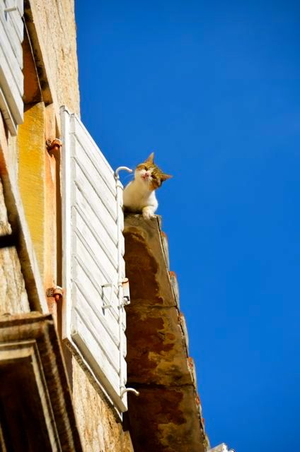 A cat prepares to jump from a rooftop to a window in the Croatian town of Trogir.