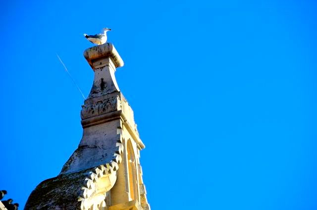 seagull on Trogir building