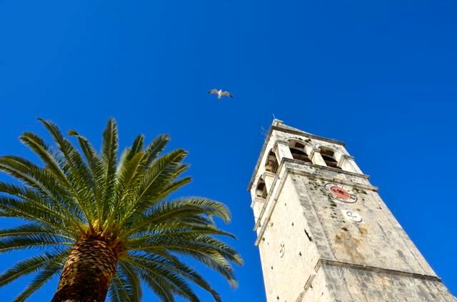 seagull flying next to church tower and palm tree