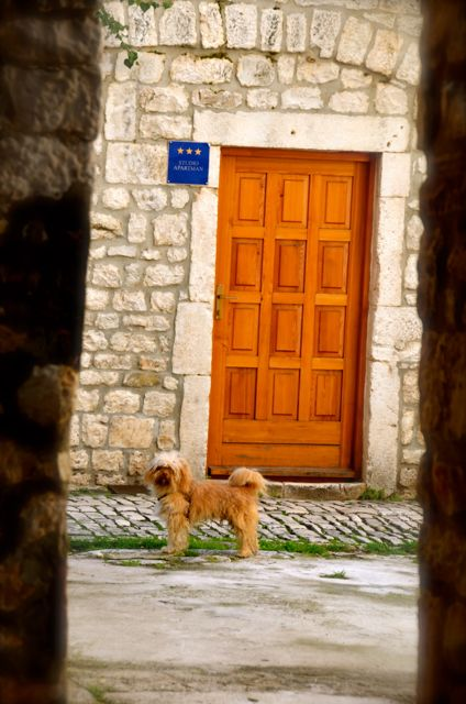 dog standing on street