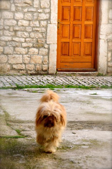 dog standing on street in croatia