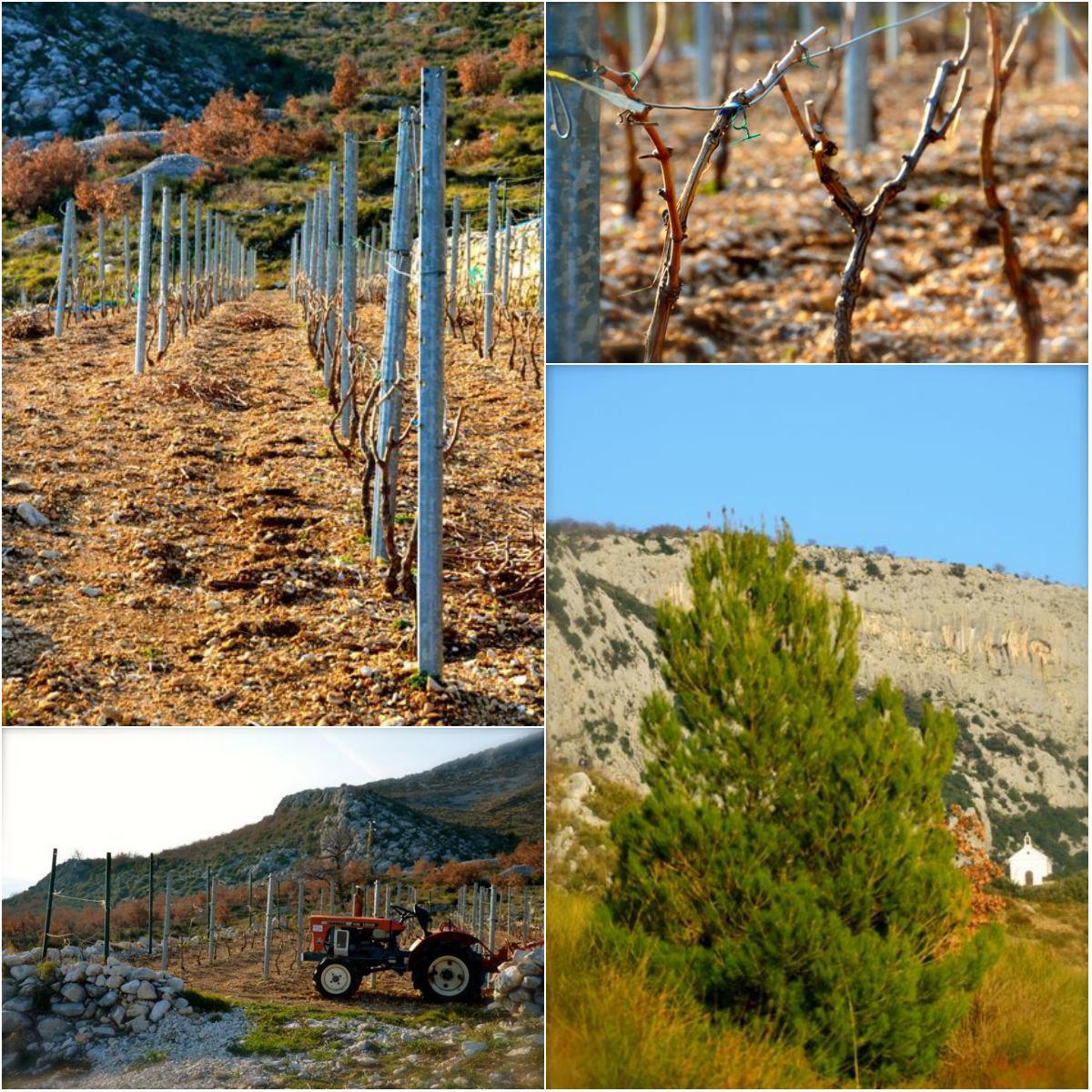 vineyards in kastela croatia tractor and landscape