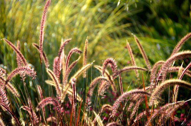 plant in sunshine